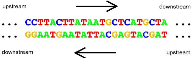 DNA_strand