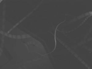 bats_trajectory2